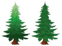 两根常青冷杉木 库存图片