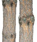 两根杉木树干 免版税库存照片