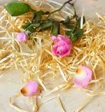 两桃红色玫瑰和木头 库存图片
