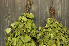 两桦树笤帚 免版税图库摄影