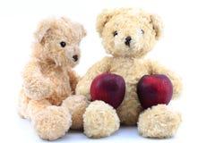 两棕熊和红色苹果在白色背景 库存照片
