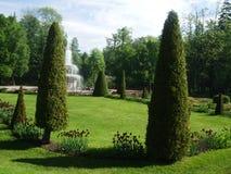 两棵三角树在Peterhof公园  库存照片