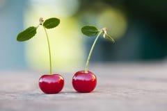 两棵与绿色叶子的红色樱桃莓果 成熟果子宏观视图照片 选择聚焦,浅景深 库存照片