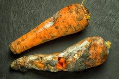 两棵发霉的坏红萝卜 图库摄影