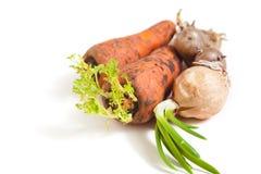 两棵成熟红萝卜在男性手上 免版税库存图片