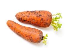 两棵成熟红萝卜在男性手上 库存照片