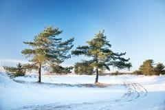 两棵杉木,冬天风景 弗罗斯特,多雪 免版税图库摄影