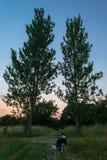 两棵树一条狗 免版税库存照片