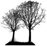 两棵树传染媒介剪影  免版税库存照片