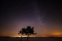 两棵树在星的背景一起增长 免版税图库摄影