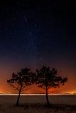 两棵树在星的背景一起增长 库存图片
