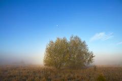 两棵树在草甸 图库摄影
