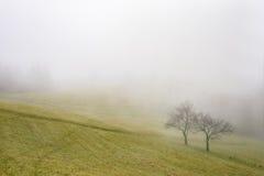 两棵树在草甸 免版税库存照片