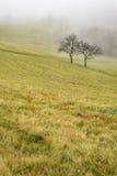 两棵树在草甸 库存图片