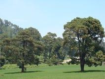 两棵树在草甸 免版税库存图片