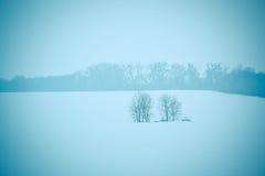 两棵树在领域冬天 免版税库存照片