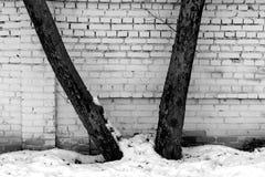 两棵树对砖墙和雪在黑白 库存照片