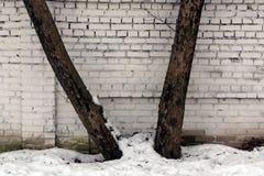 两棵树对砖墙和雪 免版税库存照片