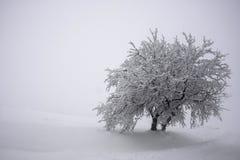 两棵树被团结在大雪下 免版税图库摄影