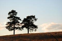 两棵树 库存图片