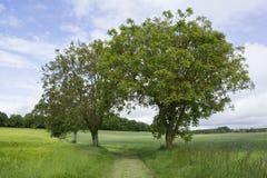 两棵树 免版税图库摄影