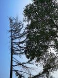 两棵树ia面对面象谈话 免版税库存图片