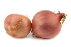两棵桃红色葱 免版税库存照片