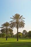 两棵棕榈树在公园迪拜 库存照片