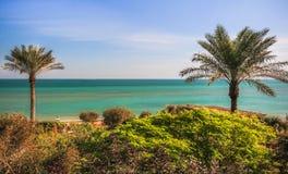 两棵棕榈树在Messila科威特 免版税库存图片
