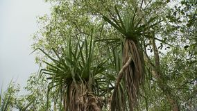 两棵棕榈树 影视素材