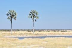 两棵棕榈waterhole在埃托沙国家公园, 库存照片