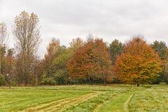 两棵红色树在秋天环境美化与红色和桔子叶子 免版税库存照片
