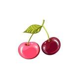 两棵美丽的水多的成熟樱桃 库存照片