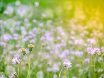 两棵草落在春天的花雪 库存照片