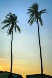 两椰子树背景蓝天 库存图片