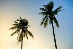 两椰子树背景蓝天 库存照片