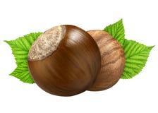 两榛子隔绝了特写镜头在壳和没有与叶子的壳作为成套设计元素 欧洲榛树白色背景 坚果宏指令 库存图片