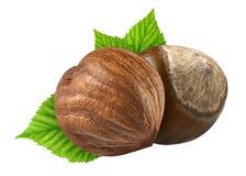 两榛子隔绝了特写镜头在壳和没有与叶子的壳作为成套设计元素 欧洲榛树白色背景 坚果宏指令 库存照片