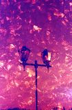 两次曝光街灯和下落的叶子 射击在35mm影片 免版税库存照片