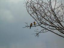 两欧洲人食蜂鸟坐树枝 库存图片