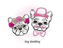 两法国牛头犬装饰画象  新娘仪式教会新郎婚礼 库存照片