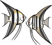 两淡水神仙鱼 库存例证