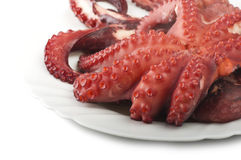 两煮沸的章鱼 库存照片
