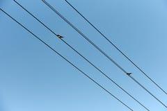 两燕子坐输电线导线在蓝天下 图库摄影