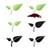 两片叶子植物在土壤增长 库存图片