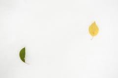 两片在雪的下落的叶子谎言 免版税库存图片