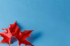 两片红槭叶子,题字的地方 免版税库存照片