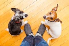 两狗和ower在家 免版税库存照片