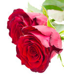 两猩红色英国兰开斯特家族族徽 免版税库存图片