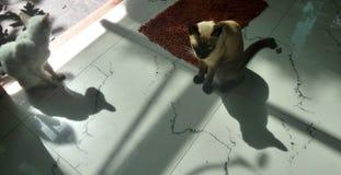 两猫的阴影坐白色地板 免版税库存照片